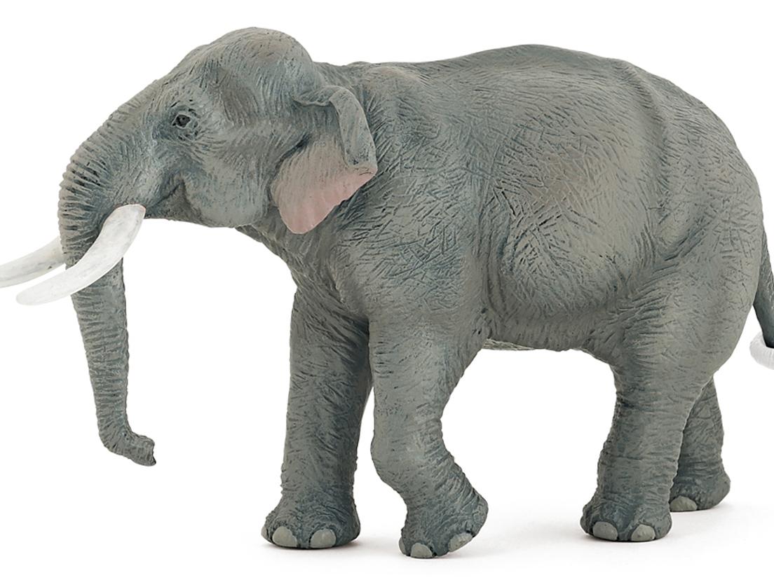 elefant bild artenschutz debatte elefanten population wird in uganda afrikanischer elefant