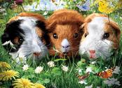 Picture 3D Guinea Pigs