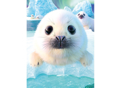 Picture 3D Seal Pup