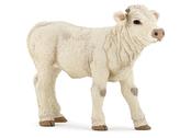 Calf Charolais