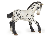 Appaloosa Foal black