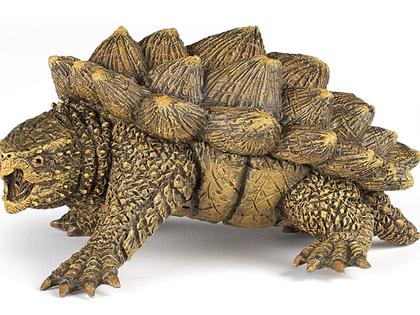 Alligatorsköldpadda