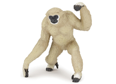 Gibbonapa