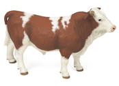 Bull Simmental brown/wh