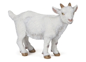 Goat Kid white
