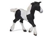 Piebald Cob Foal black/wh